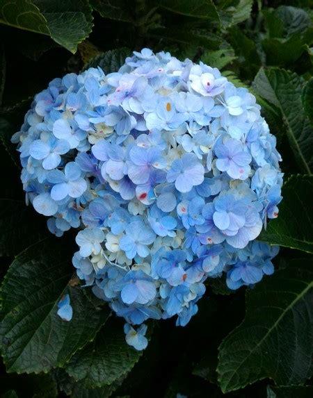 Plastik Bisa Dipakai Di Microwavemedina Azalea sejuta pesona wisata bunga di selecta batu ila rizky