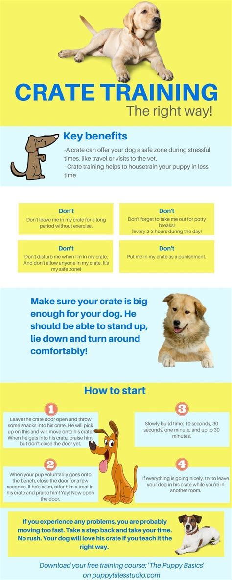 crate training best 20 crate training puppies ideas on pinterest puppy