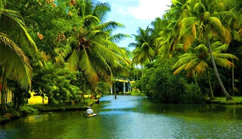 Pretty Pools by Interesting Facts Of Coconut In Indian Culture Amp Cuisine