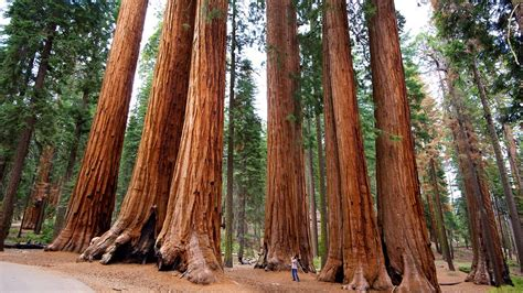 United Airlines Booking by The Best Sequoia National Park Vacation Packages 2017