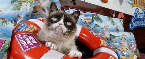 Grumpy Cat Meme Generator - grumpy cat meme generator