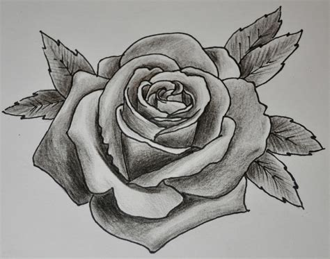 sketch rose tattoo drawing drawings