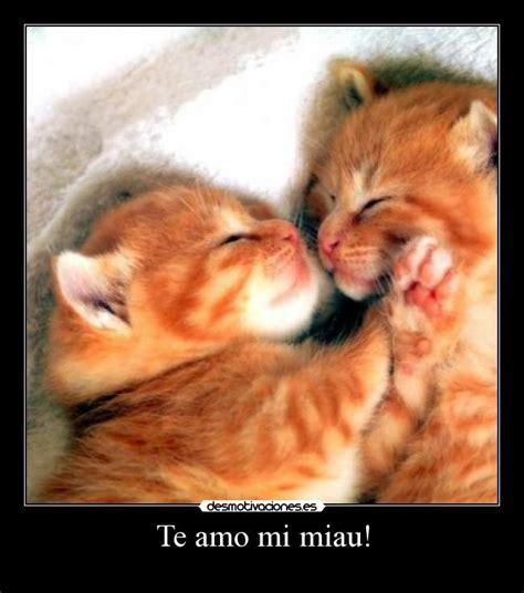 imagenes de te extraño gatitos te amo mi miau desmotivaciones