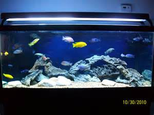 African Cichlid Tank Related Keywords & Suggestions   African Cichlid