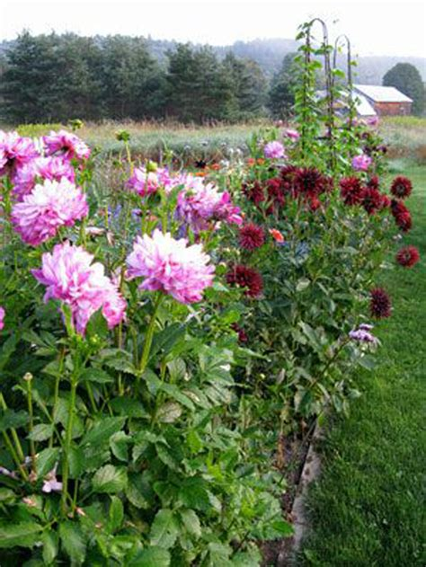 Cutting Flower Garden Five Free Ways To Add To Your Home Now Fieldstone Hill Design