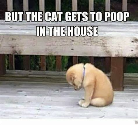 dog poops in the house lara schiffbauer s motivation for creation funny friday