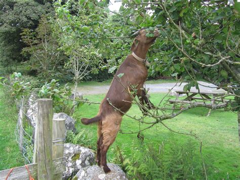 Goats In Trees Calendar Goats In Trees Frames Of Reference