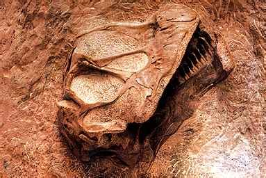 brown leach15 dinosaur national park brown