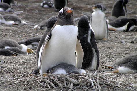 the birds nest penguin b00i1aa18c text