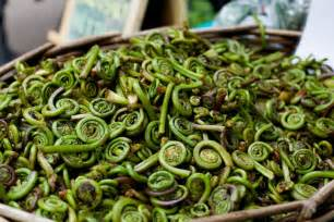 blink and you might miss your chance for fiddlehead ferns kitchn