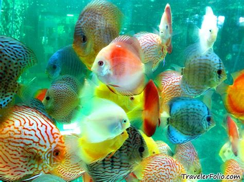 types of aquarium freshwater aquarium fish types