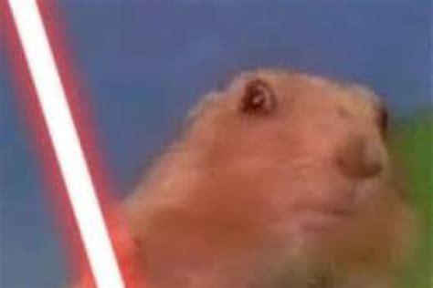 Dramatic Squirrel Meme - museudememes esquilo dram 225 tico dramatic chipmunk