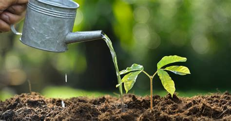 tips on watering newly planted trees the woodsman tree