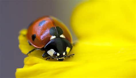 ladybird close up wins wildlife photography honours