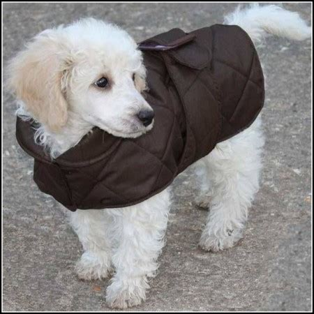 free puppy stuff for free in va pet photos gallery n72agkabz5