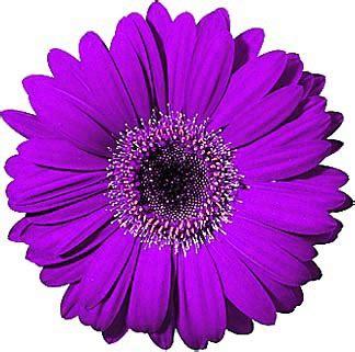 free daisy clipart public domain flower clip art images