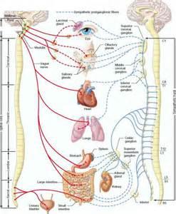 autonomic nervous system body function 78 steps health