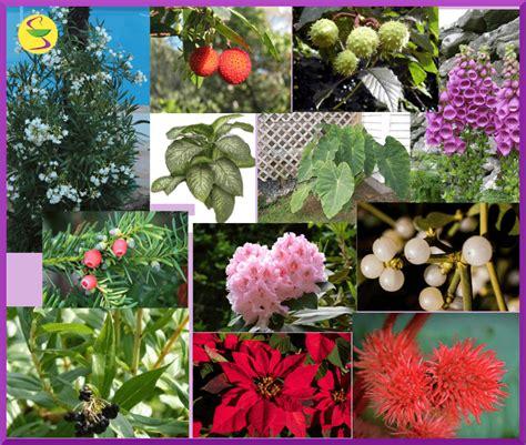 imágenes de flores venenosas principales plantas venenosas personal farma