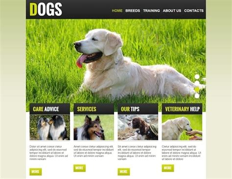 breeders websites create a website for breeders simple tips