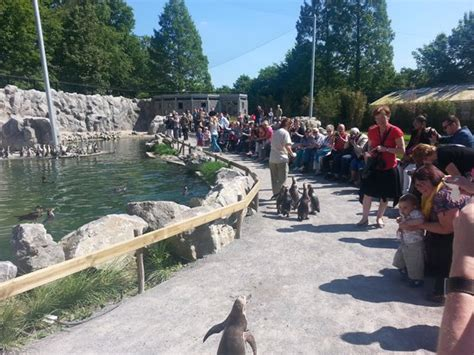 bootje planckendael wandelen tussen pinguins picture of dierenpark