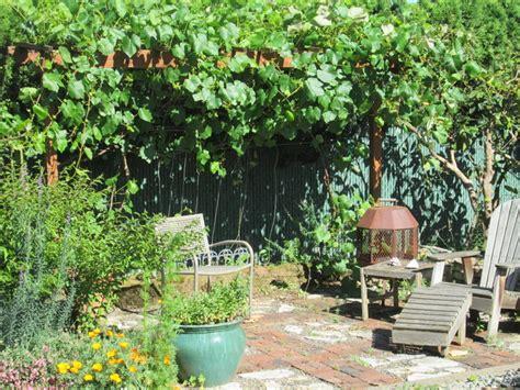Backyard Grapes by Backyard Grape Arbor Rustic