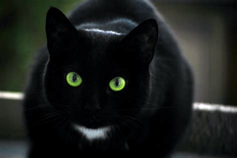 wallpaper of green eyes cats with green eyes wallpapers beautiful hd pictures