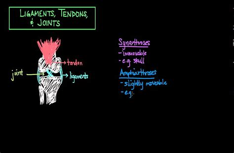 strengthen your knee tendons and ligaments with this simple