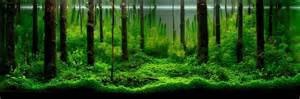 Ada Aquascaping Contest by Aquatic Aquascaping Aquarium