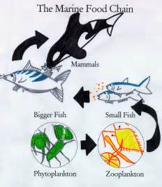 Images for ocean food chain