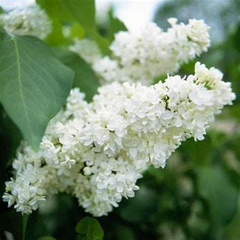 Fragrant Garden Flowers The Best Fragrant Flowers For Your Garden