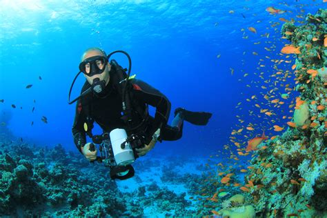 underwater dive underwater videographer enjoys spectacular scenery jpg