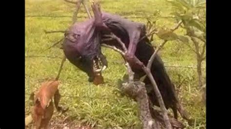 imagenes de amor jamas vistas las 10 criaturas jamas vistas youtube