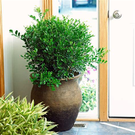 smelling houseplants  images indoor