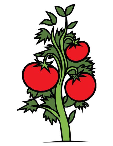 Dessin En Couleurs 224 Imprimer Nature L 233 Gumes Tomate