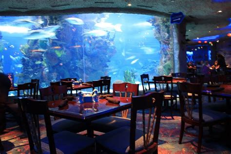 design aquarium restaurant 8 underwater restaurants you must visit before you die