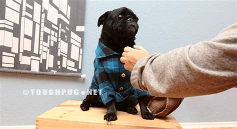 pug clothing line custom pug clothes kento s flannel sleeve button up toughpug net