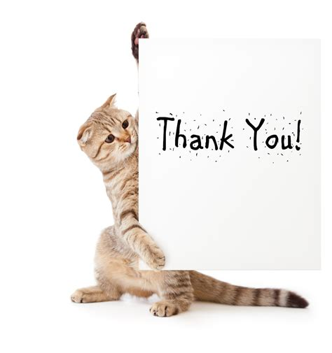 Thanks Aunties We Are The Cat In The Flickr by Volunteer Appreciation Our Thank You To You Humane