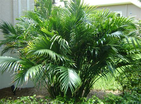 cateracterum palm weeks landscaping inc