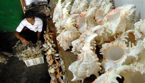 Cangkang Kerang Kepala Kambing penyelundupan rp 3 5 miliar kerang kepala kambing terbongkar nasional tempo co