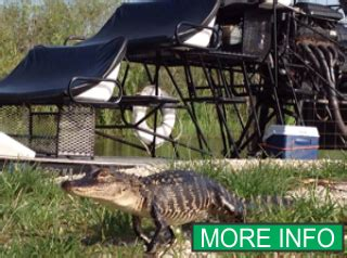 everglades boat tours near miami airboat in everglades airboat tours and airboat rides