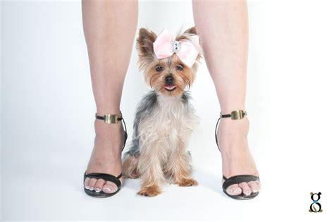 yorkie shoes pretty pups a collection of animals and pets ideas to try poodles miniature and