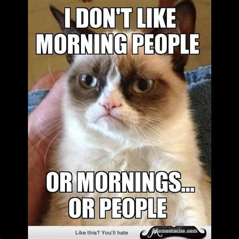 Grumpy Cat Good Morning Meme - why can t we be friends thedrinkingtraveler