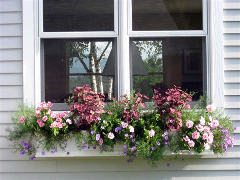 window boxes for plants exploring variegated plants for containers