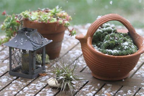 Wann Pflanzen Winterfest Machen by Bildquelle 169 Kevin Autret
