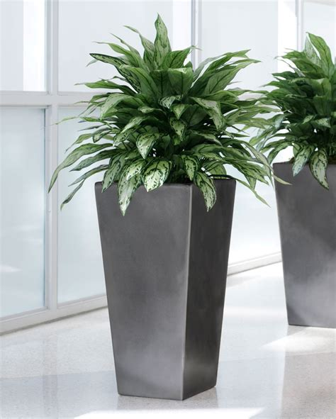 home decor plant shop double full silver queen artificial plant at petals
