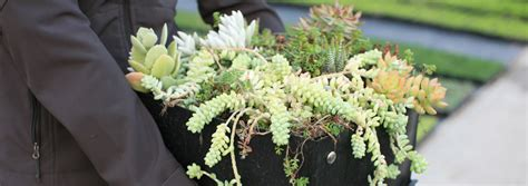 liveroof green roof systems liveroof hybrid green roofs system options