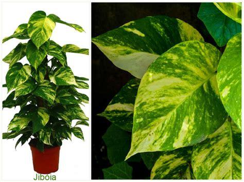 plantas  filtram  ar em ambientes internos sustentarqui