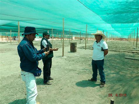 convocatorias agro rural convocatorias agro rural agro rural reforestar 225 1 500