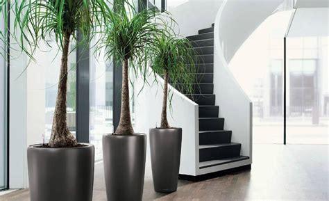 plante bureau plantes de bureau florastore
