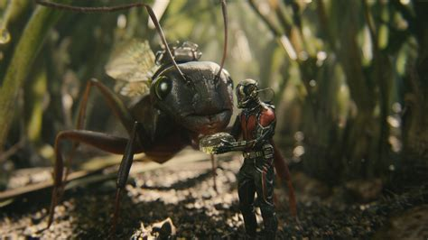 ant man movie review borg